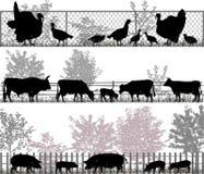 动物农场横向许多sheeeps夏天 图库摄影