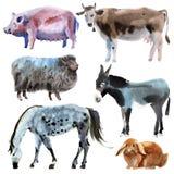 动物农场集 水彩例证在白色背景中 库存照片