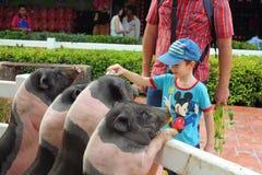 动物农场,梦想世界游乐园,曼谷,泰国 免版税库存图片