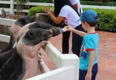 动物农场,梦想世界游乐园,曼谷,泰国 免版税库存照片