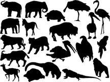 动物剪影 图库摄影