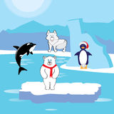 动物北极(区域) 库存图片