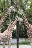 动物区系 库存照片