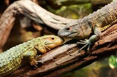 动物友谊 免版税库存图片