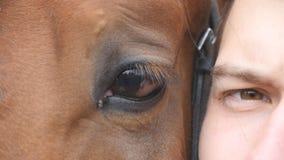 动物和肉眼-一起看照相机的马和人 关闭一匹美丽的棕色公马的眼睛的看法 影视素材
