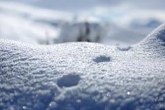 动物和阴影踪影在雪 野生动物弯曲的踪影在雪的 在雪的踪影留下不由人和c 库存图片
