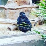 动物园克雷菲尔德 免版税库存图片