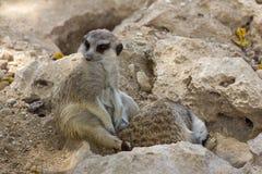 动物园动物在塞浦路斯动物园公园 库存图片