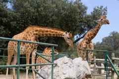 动物园动物-拉巴邦-法国 免版税库存图片