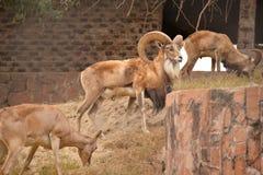 动物园动物 图库摄影