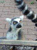 动物园时间 免版税库存照片