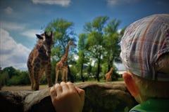 动物园的一个小男孩 库存图片
