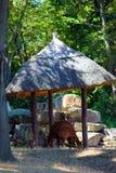 从动物园的动物 免版税图库摄影