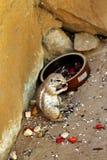 从动物园的动物 免版税库存照片