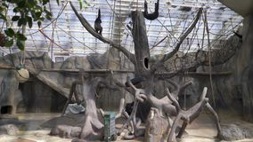动物园的访客在猴子亭子 股票视频