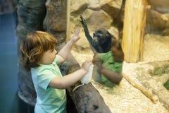 动物园的逗人喜爱的女孩,探索的动物界 库存图片