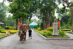 动物园管理员在西贡动物园和植物园里走大象 免版税库存图片