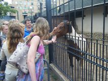 动物园被抚摸的马的人们 免版税库存照片