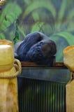 动物园DVUR KRALOVE 免版税库存照片