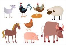 动物国内公牛的母牛 库存照片