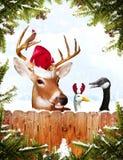 动物圣诞节 免版税图库摄影