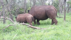 动物在公园 库存照片