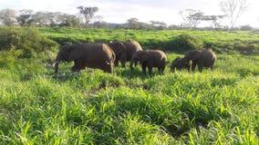动物在公园 免版税库存图片
