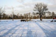 动物在冬天 库存照片