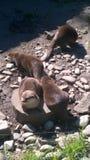 动物在动物园俄斯拉发里 免版税库存图片