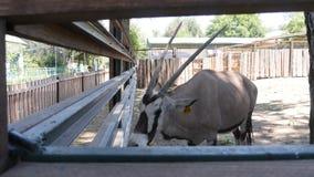 动物在动物园里 库存照片