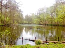 动物在湖游泳有绿色自然背景 免版税库存照片