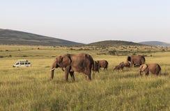 动物在马赛马拉,肯尼亚 免版税库存图片