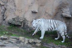 动物在Busch庭院 库存照片