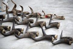 动物垫铁 库存照片
