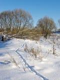动物域多雪的跟踪 库存图片