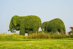动物大象树在公园 库存照片