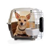 动物容器运输 免版税库存图片