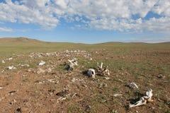 动物尸体的骨头 免版税库存图片