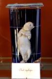 动物尸体-自然历史博物馆巴黎 免版税库存图片