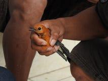 动物市场在巴厘岛印度尼西亚 免版税库存图片