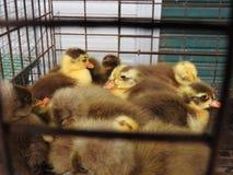 动物市场在巴厘岛印度尼西亚 免版税库存照片