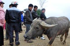 动物市场在Bac Ha,越南中 库存照片