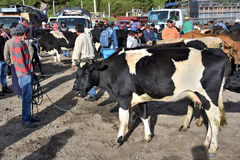 动物市场在Otavalo,厄瓜多尔 免版税库存照片