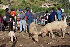 动物市场在Otavalo,厄瓜多尔 库存图片