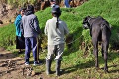 动物市场在Otavalo,厄瓜多尔 免版税库存图片