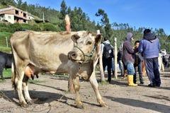 动物市场在Otavalo,厄瓜多尔 免版税图库摄影