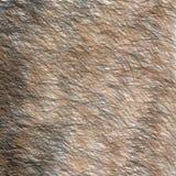 动物布朗和黑毛皮纹理 短发 免版税库存照片