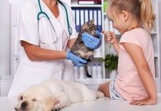 动物庇护所的小女孩检查小动物的 免版税库存图片