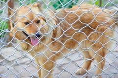 动物庇护所 狗的搭乘家 图库摄影