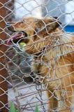 动物庇护所 狗的搭乘家 免版税库存照片